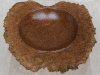 1153australian-brown-mallee-burr